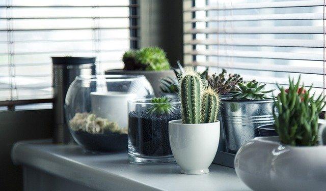 Kaktus na okně